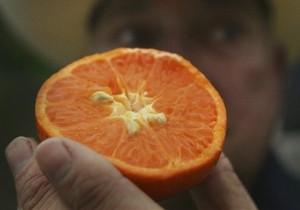 Ученые: Мандарин восстанавливает печень и убивает жировые клетки