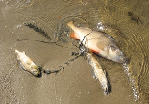 В Киеве обнаружена дохлая рыба