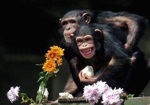 В Киевский зоопарк привезли шимпанзе
