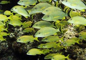 Ученые установили, что зрение рыб похоже на зрение человека