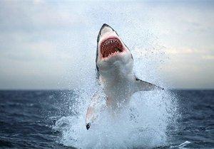 акулы в черном море фото.