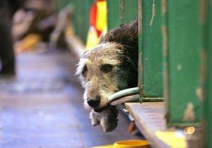 В парках появятся временные вольеры для бездомных собак