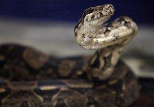 Ученые обнаружили у змей случаи непорочного зачатия