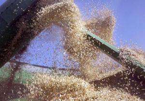 Южнокорейский концерн хочет построить зерновой терминал в Одесском порту