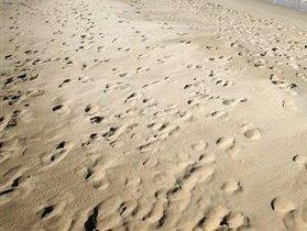 В Брюсселе украли тысячу тонн песка: конные скачки оказались под угрозой срыва