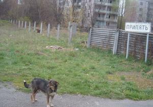 В Кабмине решили осваивать сельскохозяйственные земли Чернобыльской зоны