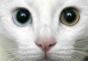 В Татарстане в качестве наркокурьера использовали кошку