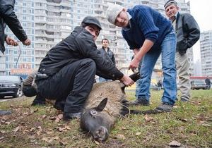 Фотогалерея: Со своим уставом. Мусульмане Москвы празднуют Курбан-Байрам