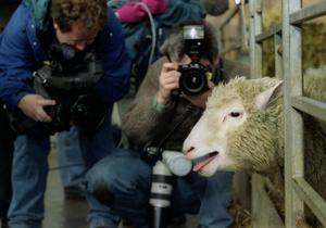 В Великобритании создали четырех клонов знаменитой овечки Долли