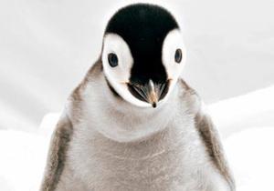 Британцы запретили рекламу онлайн-магазина, в которой пингвины доставляют еду