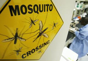 Сокращение биоразнообразия в природе может привести к вспышкам инфекционных заболеваний у людей
