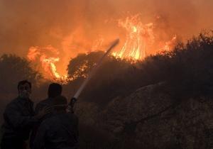 СМИ: В Израиле сгорели четыре миллиона деревьев