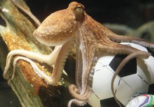 Британцы признали осьминога Пауля самым необычным животным 2010 года