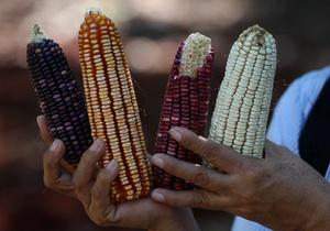 Стоимость сельхозпродуктов в 2011 году продолжит расти - эксперты