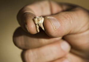 В Израиле обнаружили зуб Homo sapiens, которому приблизительно 400 тысяч лет