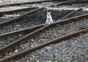 В Украине планируют запустить поезд Киев-Пляж