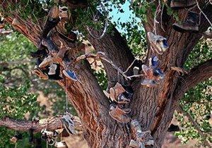 В США неизвестные срубили знаменитое обувное дерево