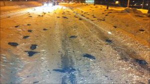 В Швеции обнаружили сотни мертвых птиц