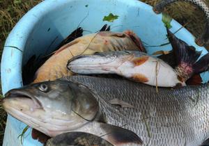 Суд обязал компанию Ахметова вернуть Мариупольский рыбный порт государству