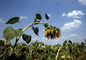 В Украине земли сельскохозяйственного назначения начнут продавать с 2013 года