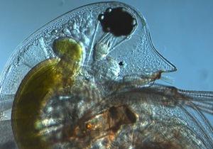 Ученые выяснили, какое живое существо обладает самым большим количеством генов