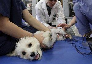 Запрет единственного препарата для анестезии животных в Украине: ветеринары бьют тревогу и приостанавливают операции