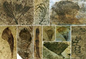 В Китае обнаружены останки растений возрастом почти 600 миллионов лет