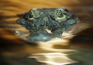 РГ: В Севастополь едут крокодилы