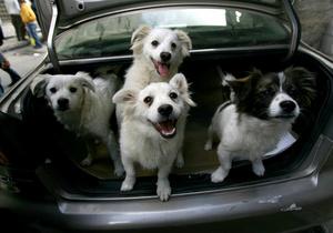 Жителям Шанхая запретят заводить больше одной собаки