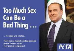 Берлускони стал лицом рекламной кампании за кастрацию котов