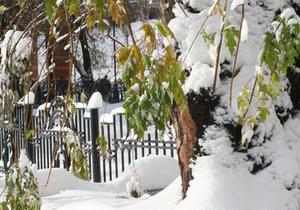 В феврале земля под Киевом подешевела до $3 922 за сотку