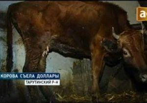 В Одесской области корова съела несколько тысяч краденых долларов