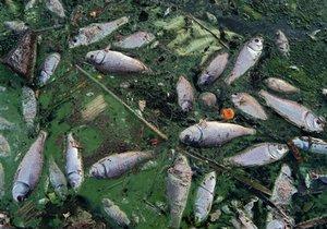 Американские ученые предложили бороться с вымиранием животных путем истребления