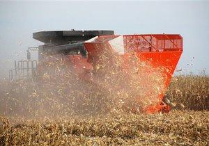 Урожай зерновых в Украине в 2011 году составит более 42 млн тонн - Минагропрод