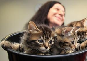 Британские ученые создали средство против аллергии на кошек