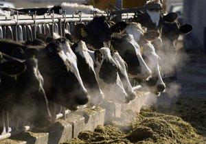 Кабмин утвердил новый порядок дотирования производителей молока и мяса