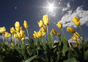 В ночь с 20 на 21 марта наступит весеннее равноденствие