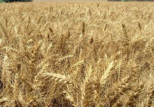 Минэкономразвития не готовит предложений по продлению квотирования зерна