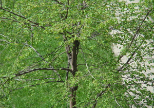 Глава Гослесагентства рассказал, на сколько Украине хватит запасов леса