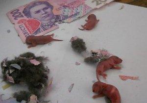 В Луцке мыши погрызли купюры в банкомате