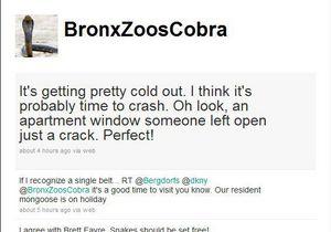 В Нью-Йорке поймали кобру, ставшую звездой Тwitter
