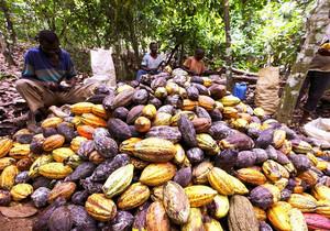 Кот-д'Ивуар планирует после снятия санкций ЕС начать экспорт какао