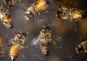 В Техасе пчелы насмерть закусали пожилую пару