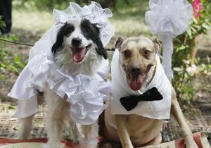Ученые полагают, что самки собак могут быть умнее самцов