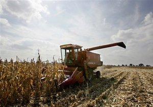 Украина отменила экспортные квоты на кукурузу