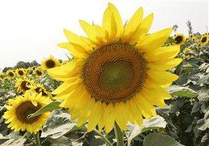 Крупный украинский агрохолдинг увеличил чистую прибыль в І квартале