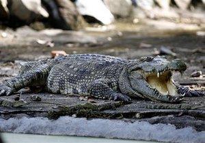 В ЮАР крокодилы помешали вовремя открыть избирательные участки