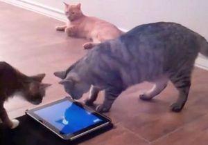 Производитель кормов разработал серию iPad-игр для котов