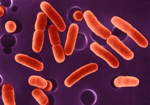 В Германии десять человек умерли от заражения кишечной палочкой