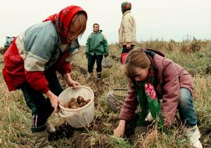 Исследование: 71,4% жителей села не выращивают продукцию на продажу